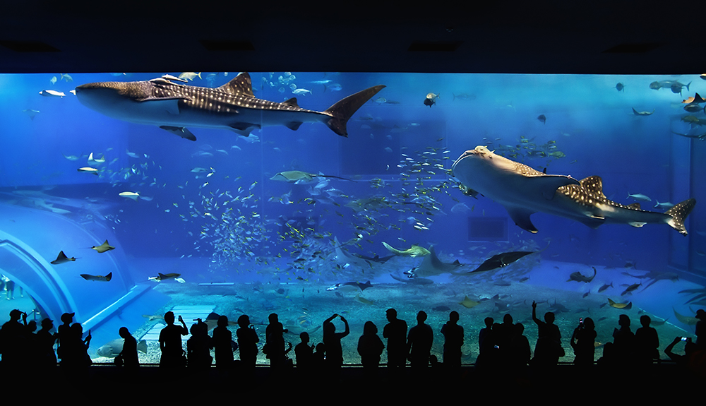 Chaurami Aquarium